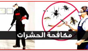 مكافحة حشرات الفراش والنمل الأبيض
