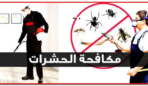 شركة مرخصة لرش الحشرات